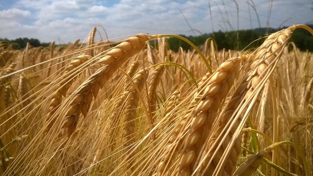 wheat cereal additief additieven