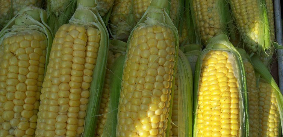 Globafix corn mais maiskolf kolf plantaardig
