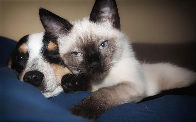 huisdieren gezelschapsdieren hond kat Ascoscan