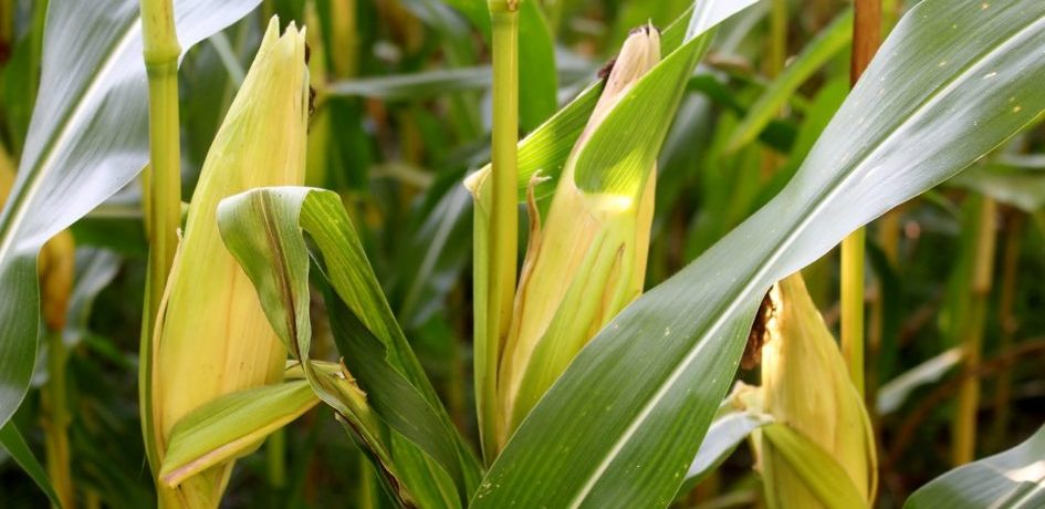 Globafix Plant plantaardig